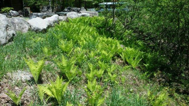 八丁の湯周辺も深緑の季節となりました