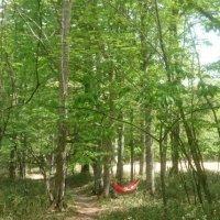 夏休み企画 奥鬼怒ブナ平ハイキング開催のお知らせ